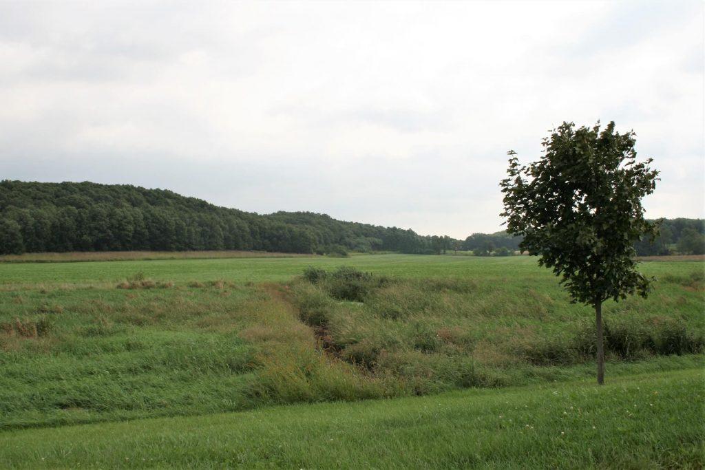 Larson grass fields