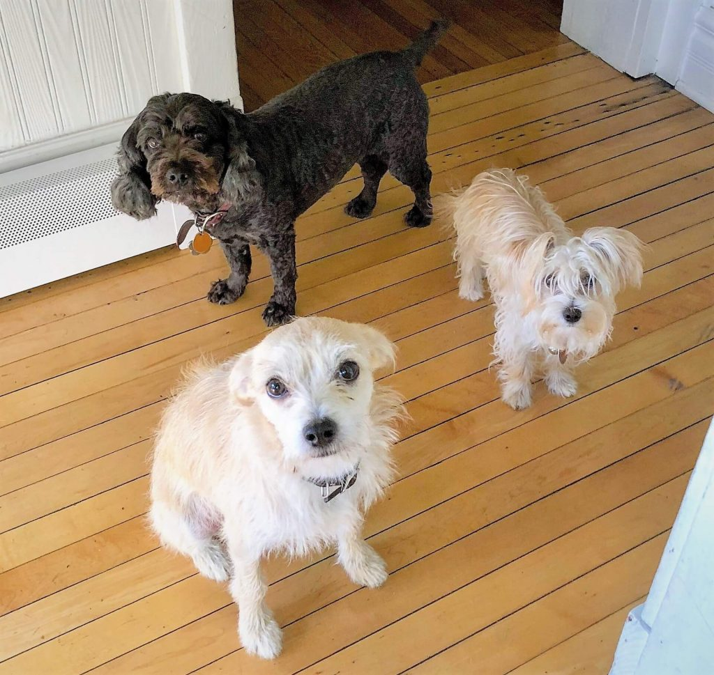 Background, Roby, left, Rocco, right, Arlo